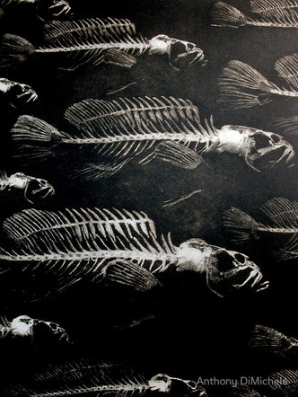 Skeleton Fish (from For the Coming Extinctions)