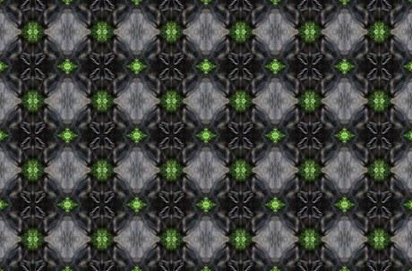 Cavy Pattern