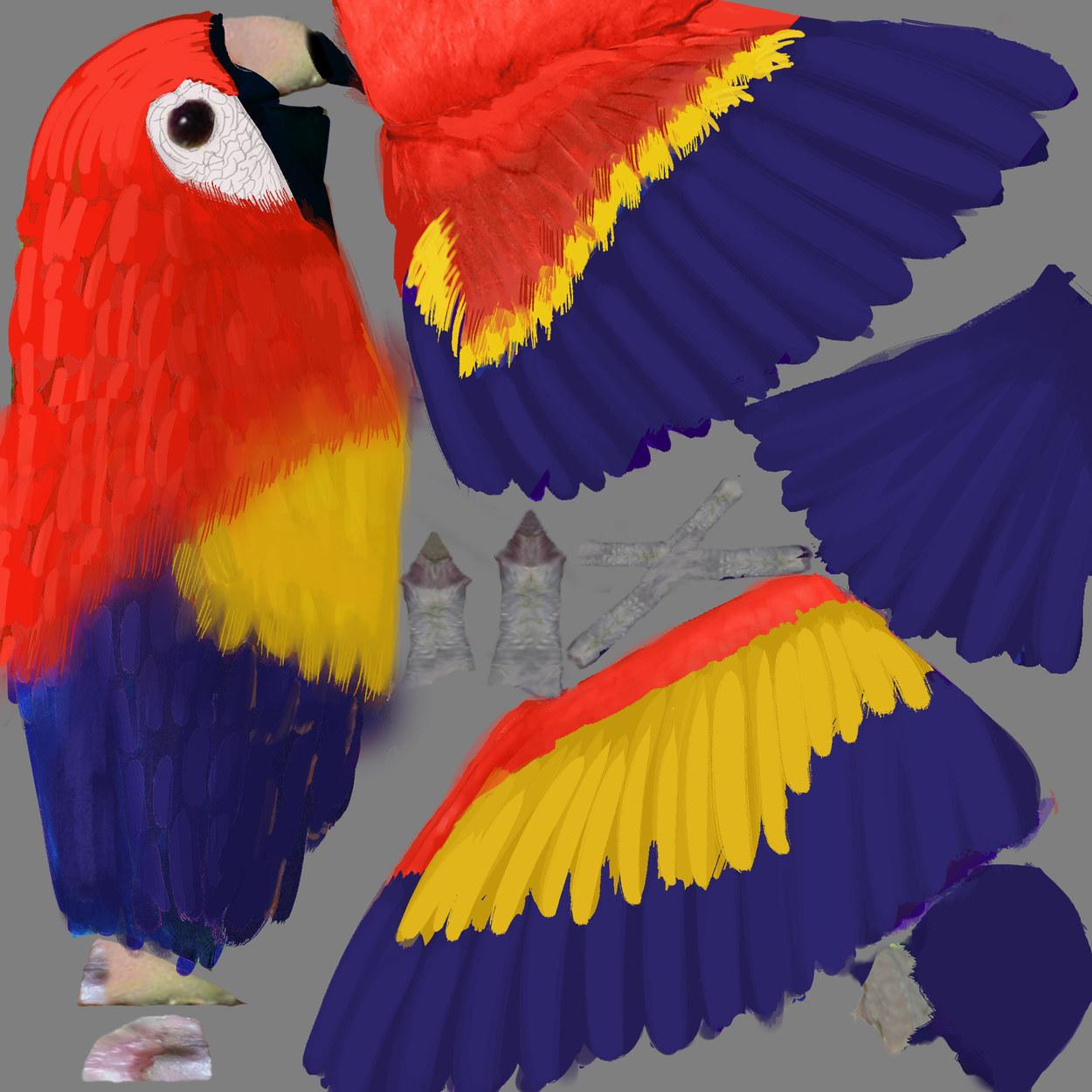 Parrot Texture