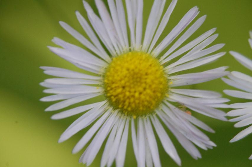 Flower Macro III