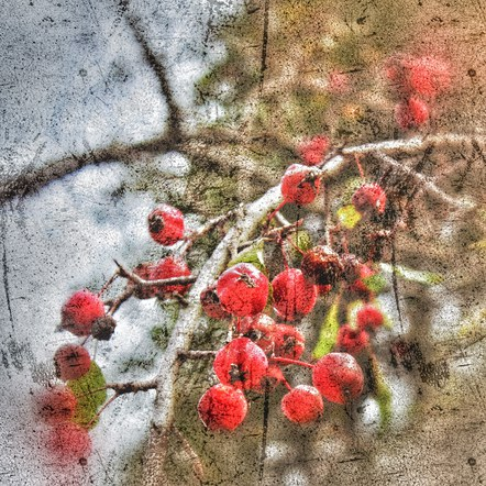 Crabapples through Looking Glass