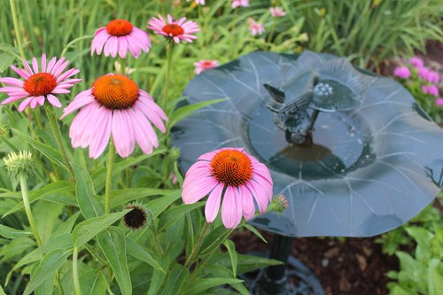 A Picture of Health (Echinacea)
