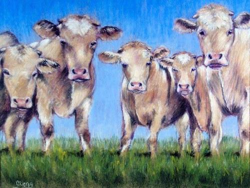 Bunch of Bull